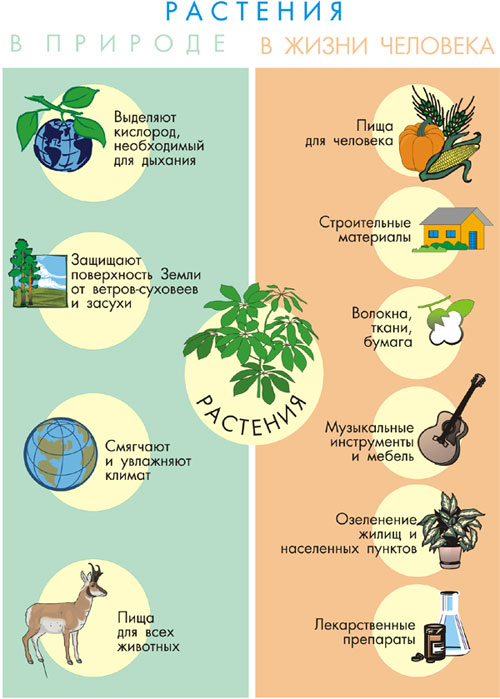 http://e-lib.gasu.ru/eposobia/botany/00/03/04.jpg