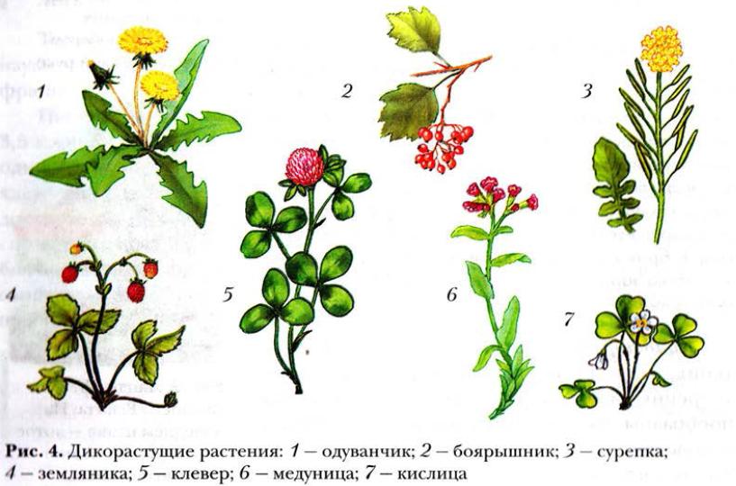 http://biology.ucoz.net/4.png