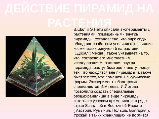 ДЕЙСТВИЕ ПИРАМИД НА РАСТЕНИЯ В.Шал и Э.Пети описали эксперименты с растениями...