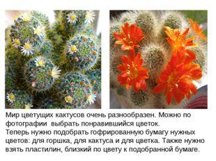 Мир цветущих кактусов очень разнообразен. Можно по фотографии выбрать понрави