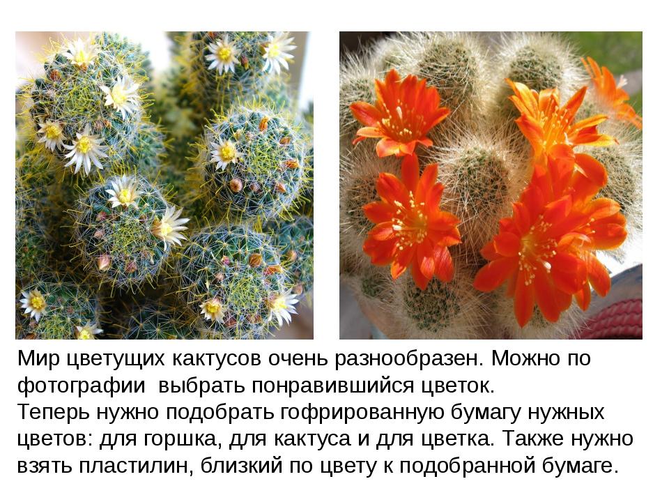 Мир цветущих кактусов очень разнообразен. Можно по фотографии выбрать понрави...