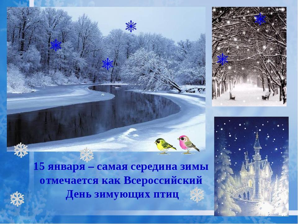 15 января – самая середина зимы отмечается как Всероссийский День зимующих птиц