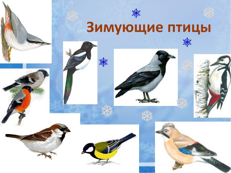 Картинка для доу зимующие птицы