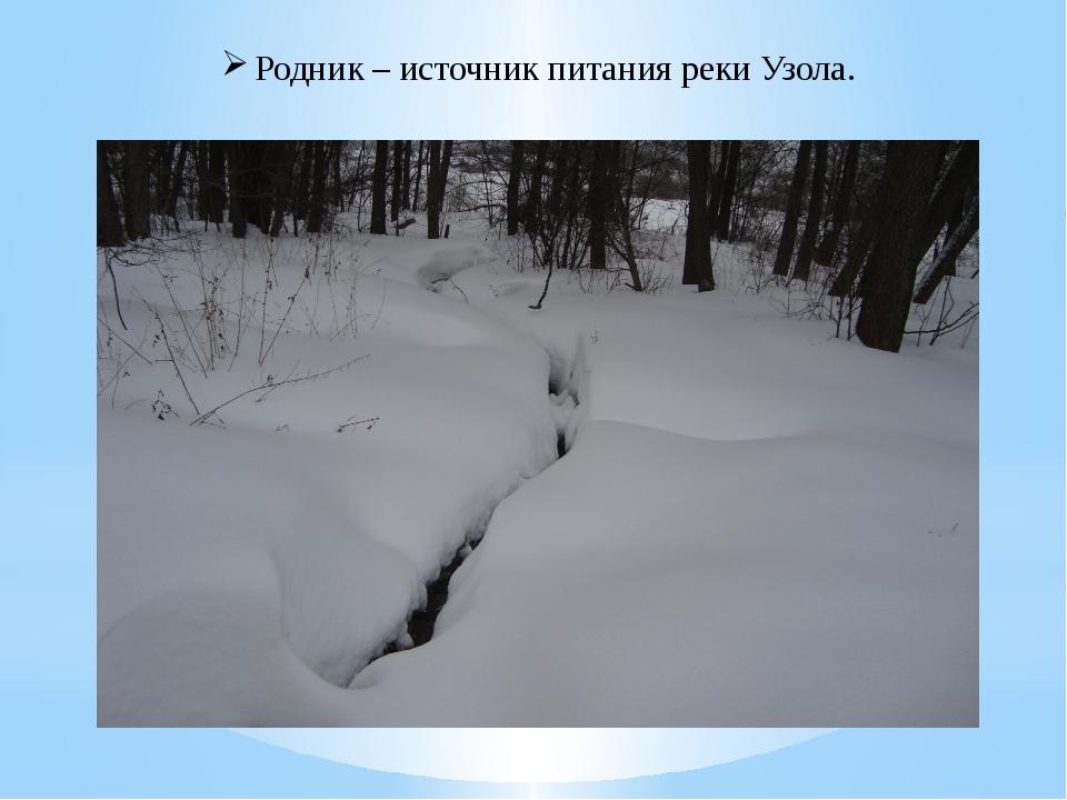 Родник – источник питания реки Узола.