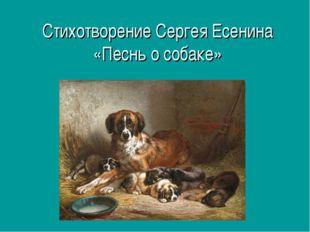 Стихотворение Сергея Есенина «Песнь о собаке»