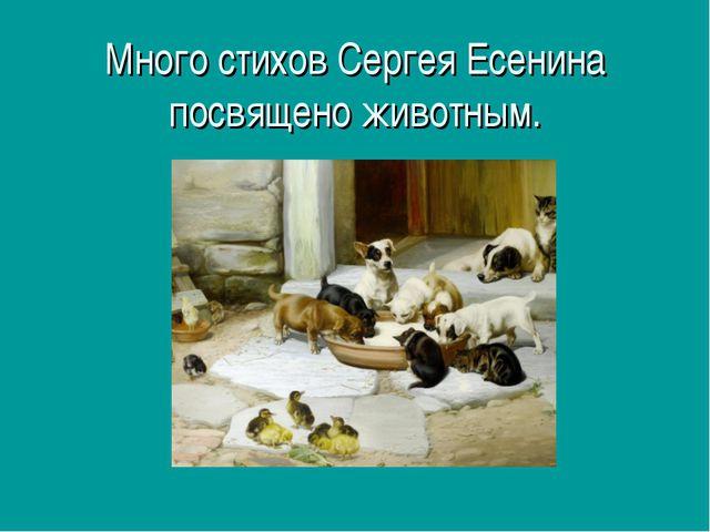 Много стихов Сергея Есенина посвящено животным.