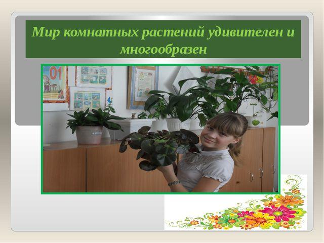 Мир комнатных растений удивителен и многообразен