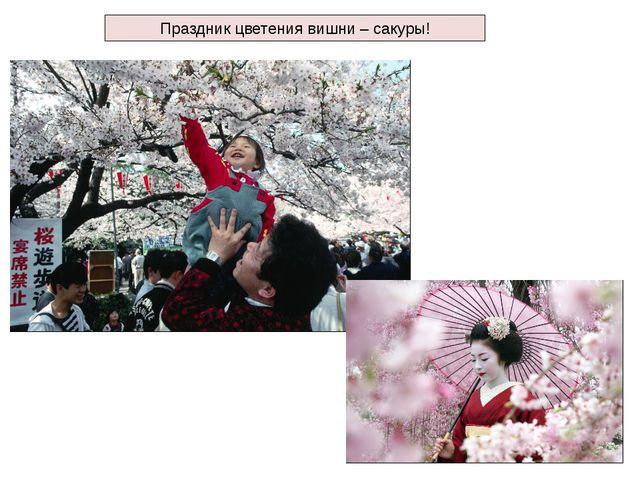 Праздник цветения вишни – сакуры!