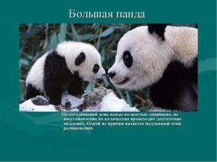 Большая панда На сегодняшний день панда полностью защищена, но восстановление