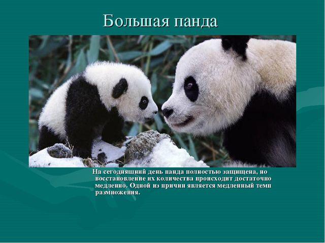 Большая панда На сегодняшний день панда полностью защищена, но восстановление...