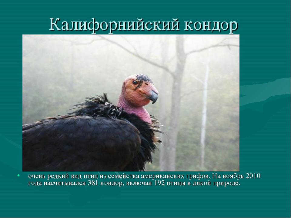 Калифорнийский кондор очень редкий вид птиц из семейства американских грифов....