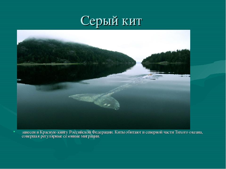 Серый кит занесен в Красную книгу Российской Федерации. Киты обитают в северн...