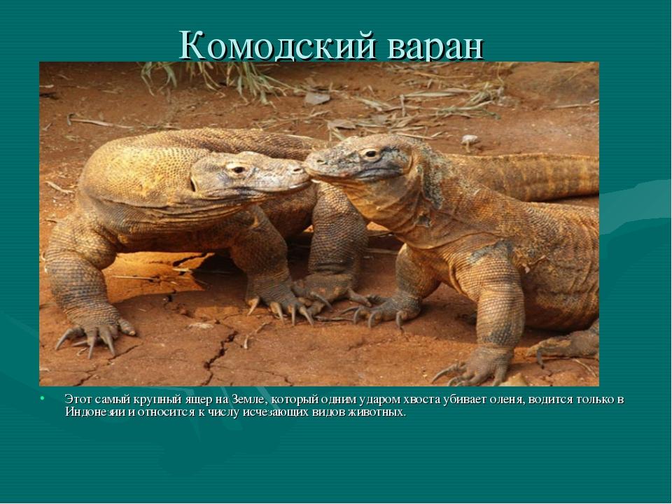 Комодский варан Этот самый крупный ящер на Земле, который одним ударом хвоста...