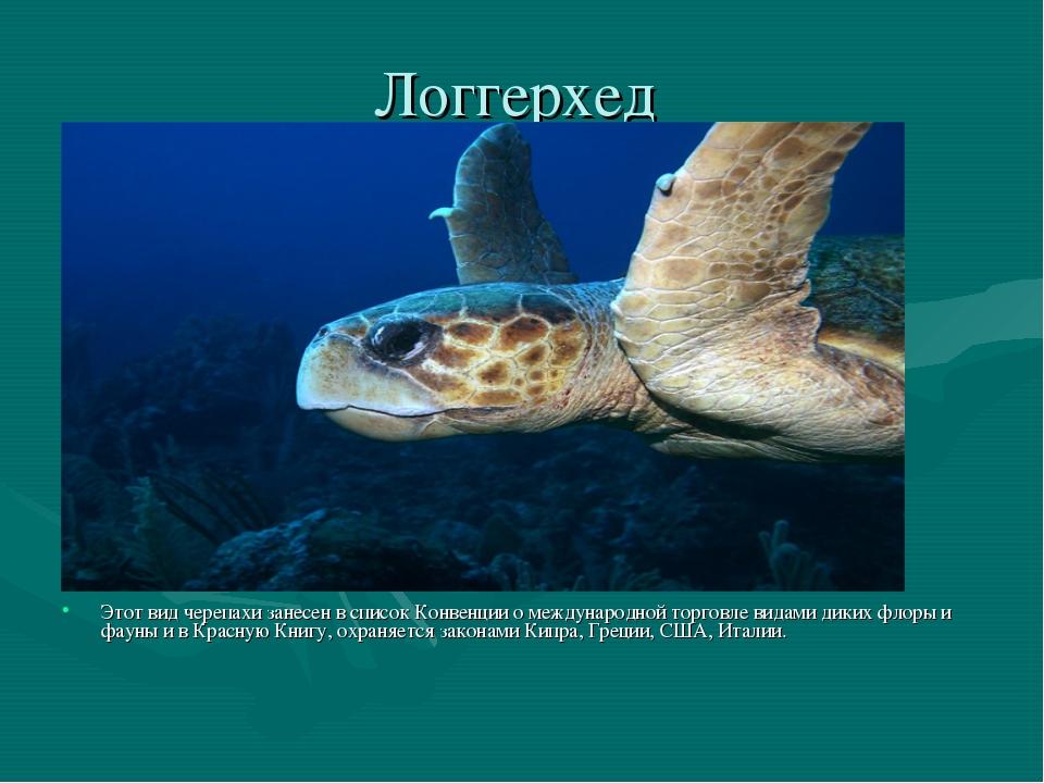Логгерхед Этот вид черепахи занесен в список Конвенции о международной торгов...