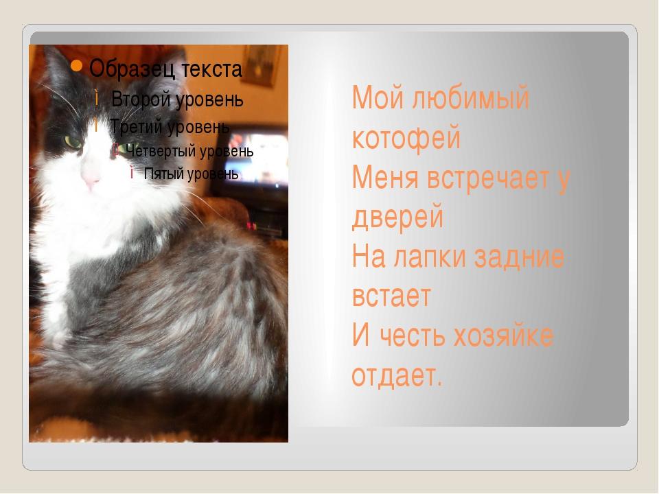 Мой любимый котофей Меня встречает у дверей На лапки задние встает И честь хо...
