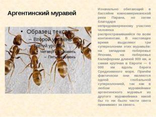 Аргентинский муравей Изначально обитающий в бассейне южноамериканской реки Па