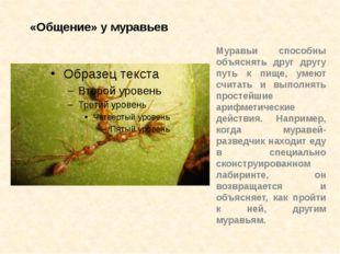 «Общение» у муравьев Муравьи способны объяснять друг другу путь к пище, умеют