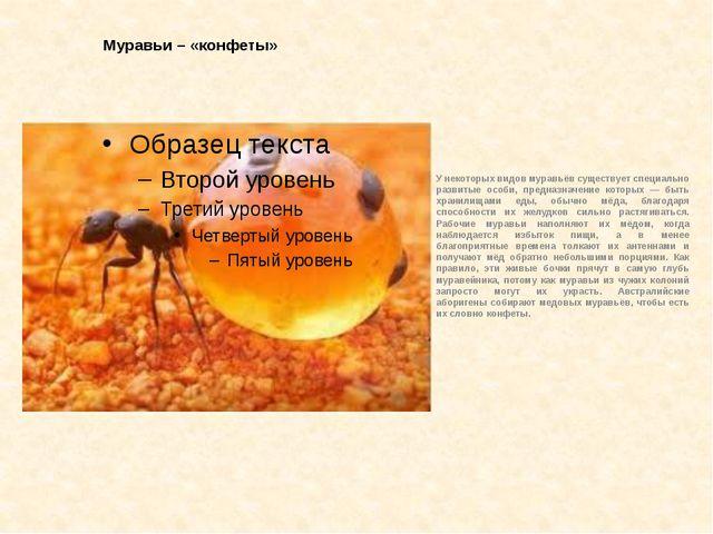Муравьи – «конфеты» У некоторых видов муравьёв существует специально развитые...