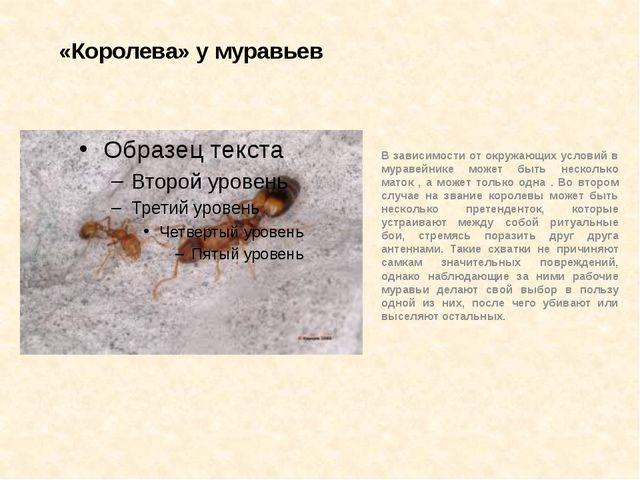«Королева» у муравьев В зависимости от окружающих условий в муравейнике может...