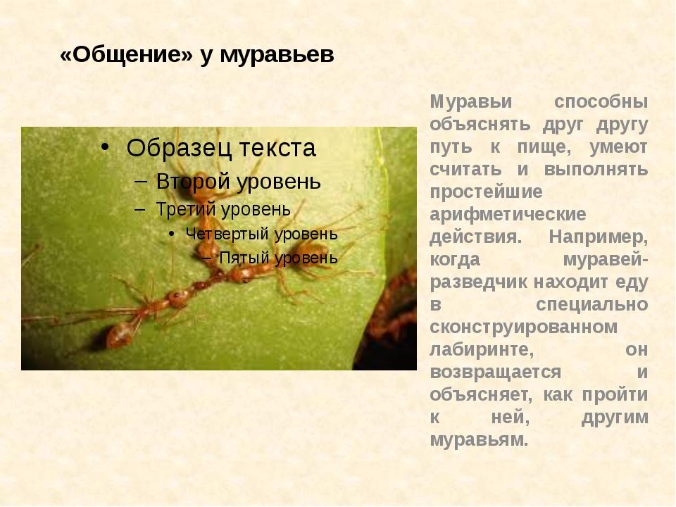 «Общение» у муравьев Муравьи способны объяснять друг другу путь к пище, умеют...