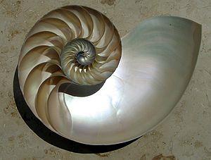 https://upload.wikimedia.org/wikipedia/commons/thumb/0/08/NautilusCutawayLogarithmicSpiral.jpg/300px-NautilusCutawayLogarithmicSpiral.jpg