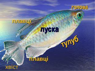 голова тулуб луска плавці хвіст плавці