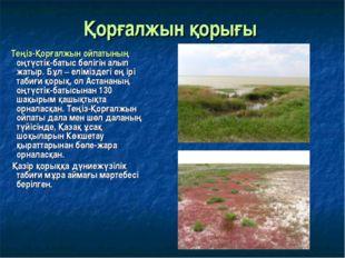 Қорғалжын қорығы Теңіз-Қорғалжын ойпатының оңтүстік-батыс бөлігін алып жатыр.