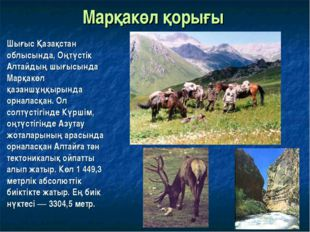 Марқакөл қорығы Шығыс Қазақстан облысында, Оңтүстік Алтайдың шығысында Марқак
