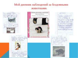 Мой дневник наблюдений за бездомными животными.