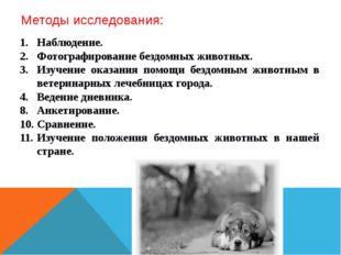 Методы исследования: Наблюдение. Фотографирование бездомных животных. Изучени