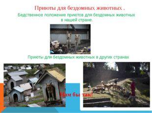 Приюты для бездомных животных . Бедственное положение приютов для бездомных ж