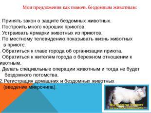 Мои предложения как помочь бездомным животным:  Принять закон о защите бездо