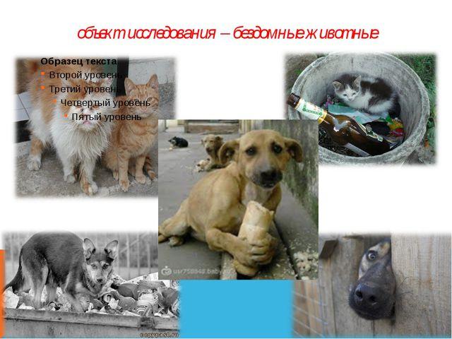 объект исследования – бездомные животные
