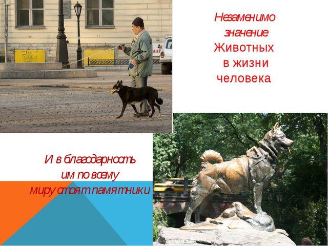 Незаменимо значение Животных в жизни человека И в благодарность им по всему...
