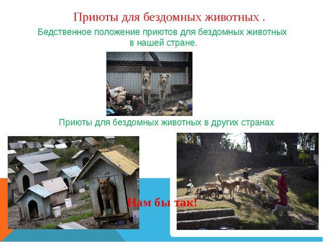 Приюты для бездомных животных . Бедственное положение приютов для бездомных ж...
