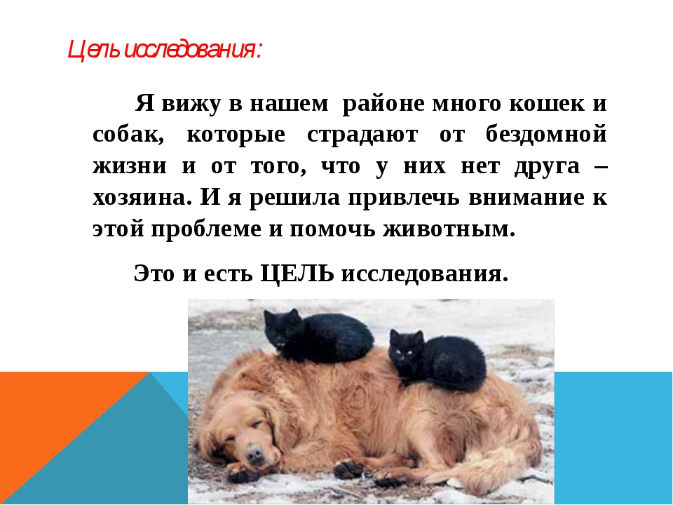 Цель исследования: Я вижу в нашем районе много кошек и собак, которые страдаю...