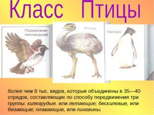 более чем 8 тыс. видов, которые объединены в 35—40 отрядов, составляющих по с