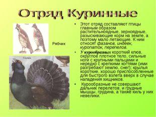Этот отряд составляют птицы главным образом растительноядные, зерноядные, раз
