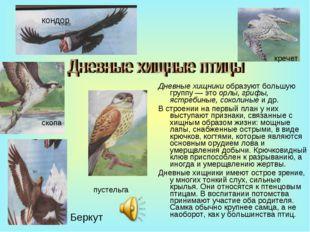 Дневные хищники образуют большую группу — это орлы, грифы, ястребиные, соколи