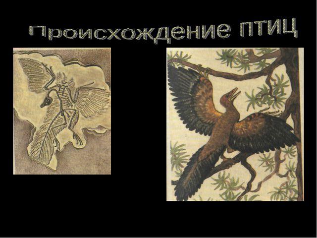 Археоптерикс Скелет и отпечатки перьев