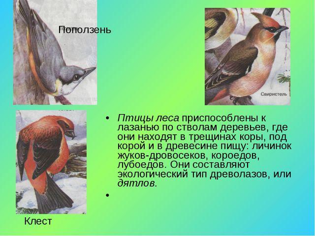Птицы леса приспособлены к лазанью по стволам деревьев, где они находят в тре...