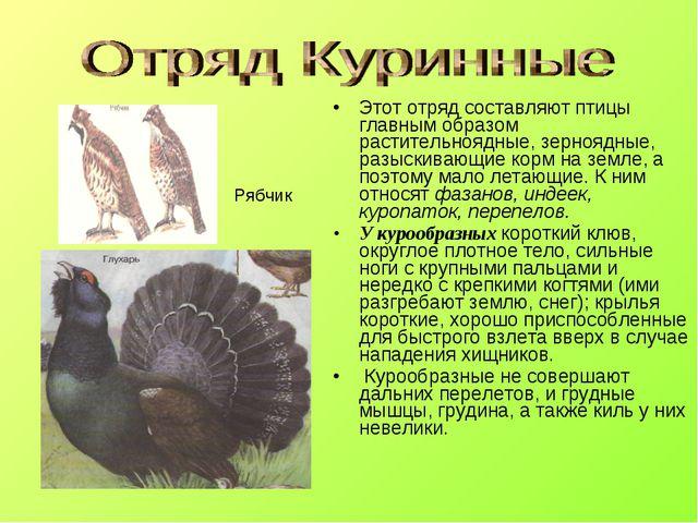 Этот отряд составляют птицы главным образом растительноядные, зерноядные, раз...