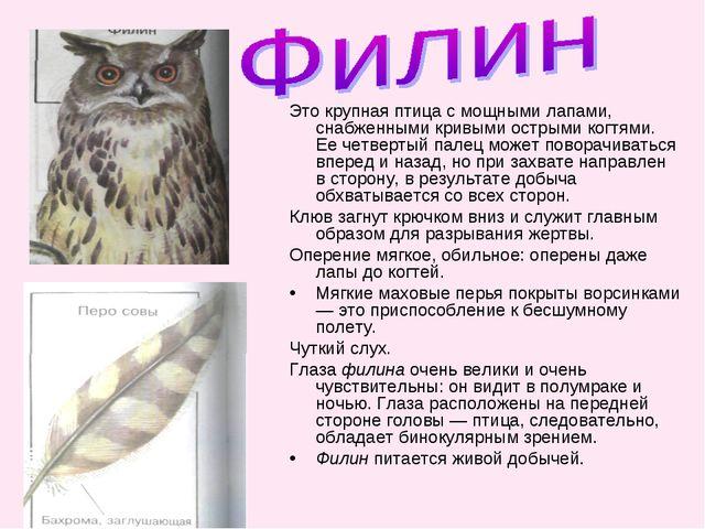 Это крупная птица с мощными лапами, снабженными кривыми острыми когтями. Ее ч...