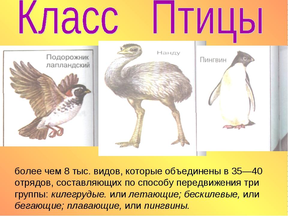 более чем 8 тыс. видов, которые объединены в 35—40 отрядов, составляющих по с...