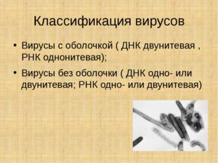 Классификация вирусов Вирусы с оболочкой ( ДНК двунитевая , РНК однонитевая);