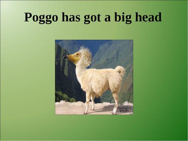 Poggo has got a big head