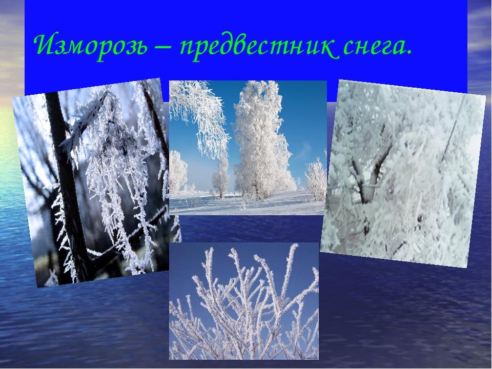 Изморозь – предвестник снега.