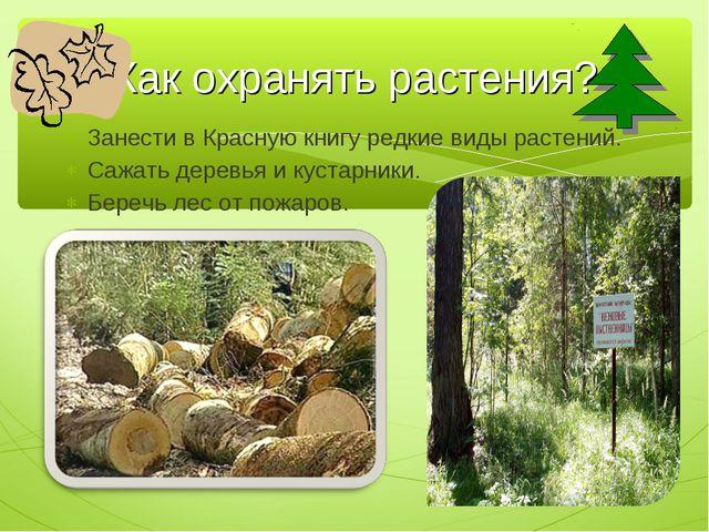 Занести в Красную книгу редкие виды растений. Сажать деревья и кустарники. Бе...