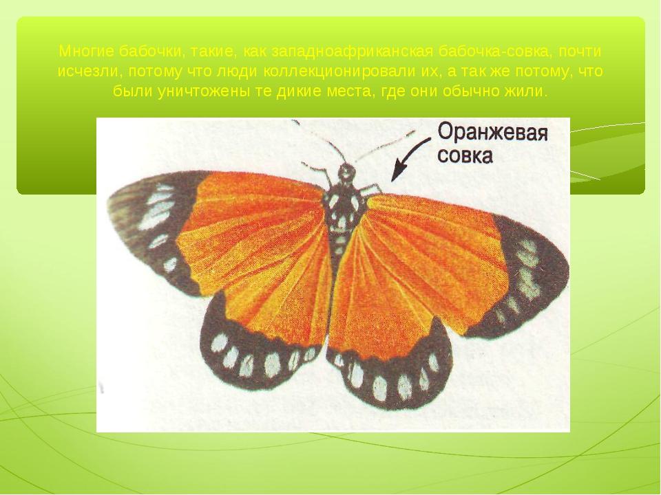 Многие бабочки, такие, как западноафриканская бабочка-совка, почти исчезли, п...