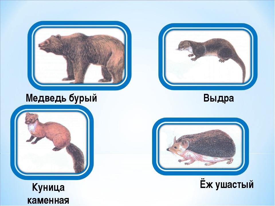 Медведь бурый Выдра Куница каменная Ёж ушастый